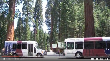 A photo of two brown and white shuttle buses in front of large redwood trees.